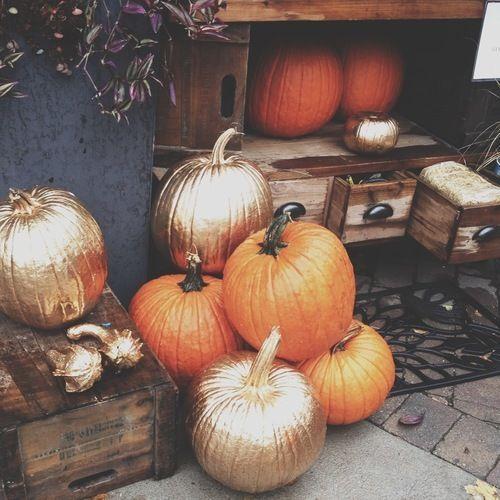 Haute Pumpkins for This Halloween